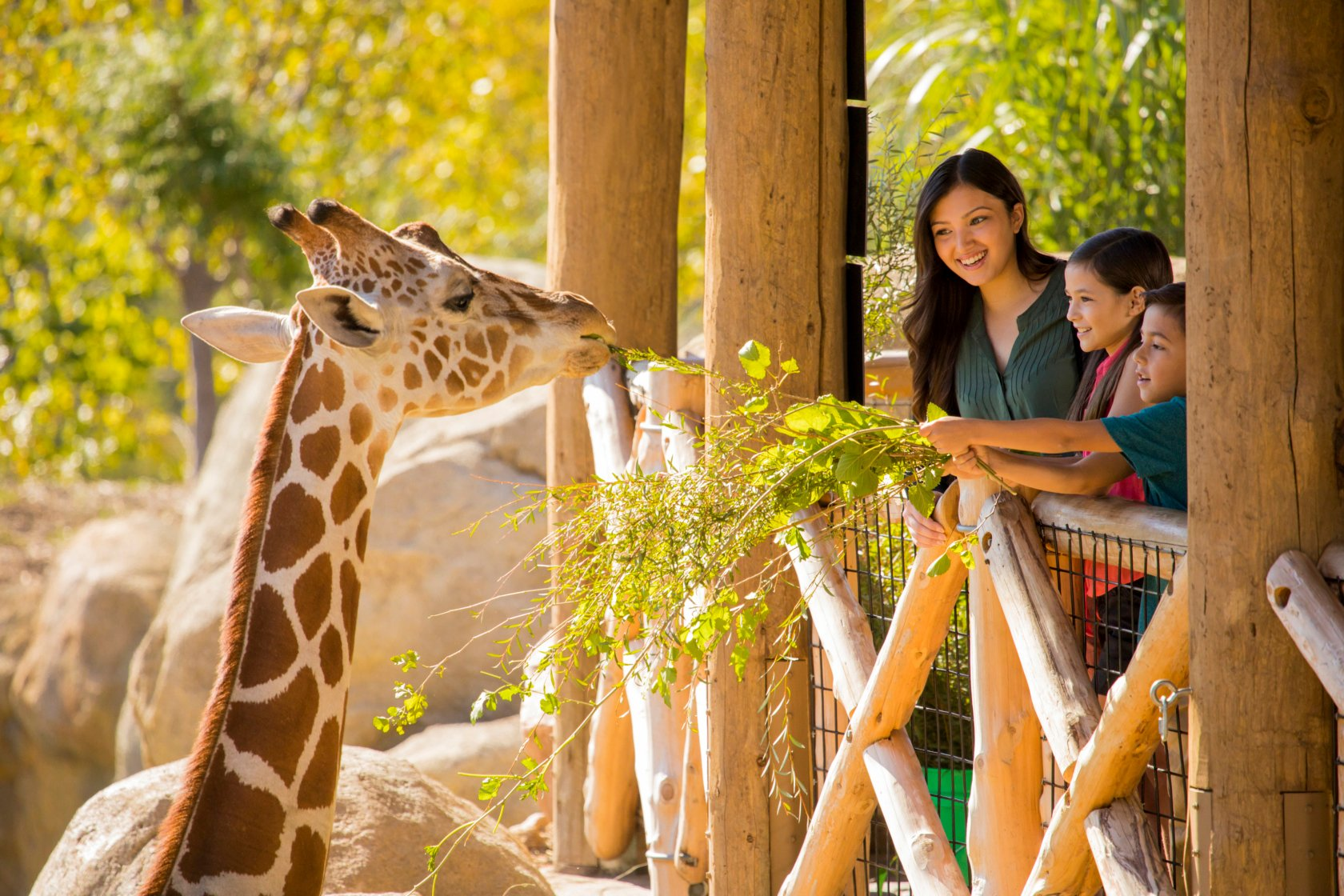 SS African Grasslands Giraffe Eating with Family 2 2016